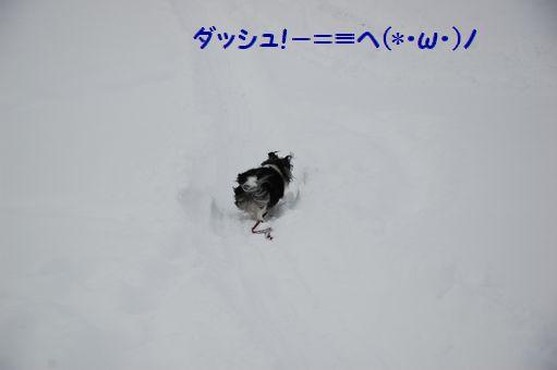 2012☆初冠雪 003.JPG
