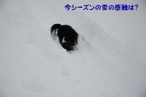 2012☆初冠雪 005.JPG