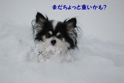 2012☆初冠雪 017.JPG