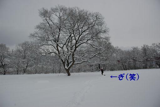 2012☆初冠雪 029.JPG
