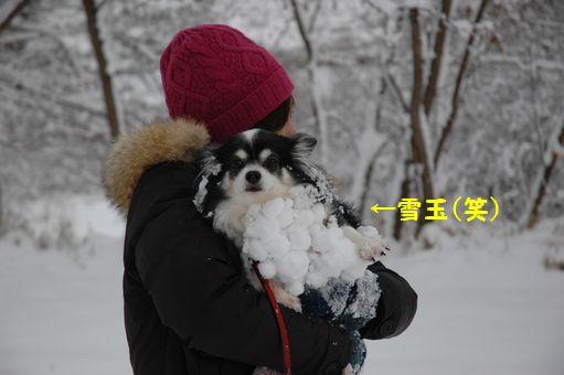 2012☆初冠雪 033.JPG