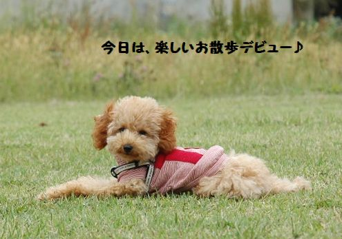 6月は、さぼっちまったな~(笑い 104.JPG