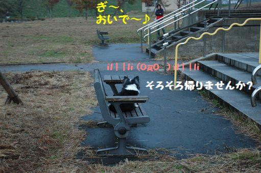 あらわれる雨降って、ぎ 026.JPG