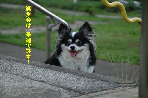 なでしこJAPAN! 028.JPG