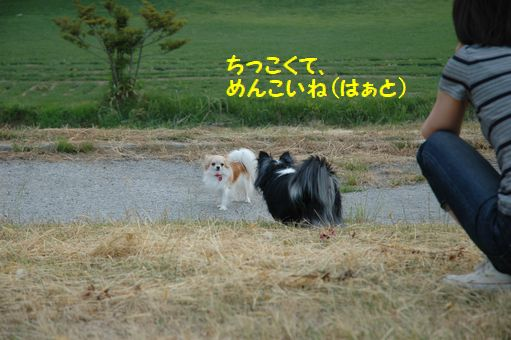 カウボーイたまごちゃんレア色ピンク 015.JPG