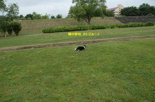 カウボーイたまごちゃんレア色ピンク 031.JPG