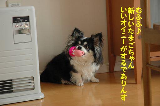 カウボーイたまごちゃんレア色ピンク 036.JPG