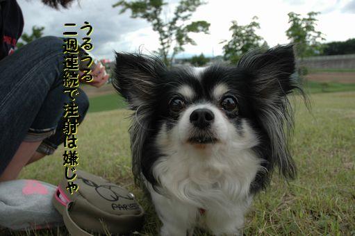 カウボーイたまごちゃんレア色ピンク 043.JPG