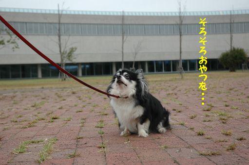シャープ♪ 042.JPG