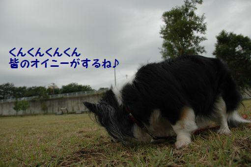チョコちゃん♪ 001.JPG