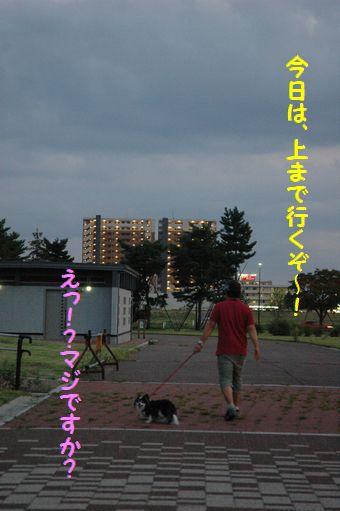 ハチマキたまごちゃん 040.JPG