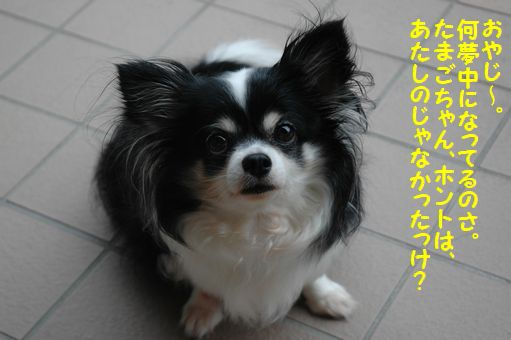ハチマキたまごちゃん 077.JPG
