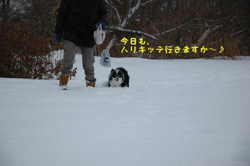 不毛地帯 006.JPG