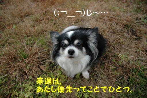 勤労感謝の日2010 002.JPG