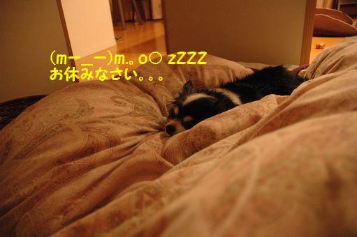 姐さんの一日(平日編) 001.JPG