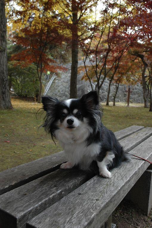 岩手公園 107.JPG