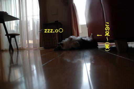 海の日@2012 038.JPG