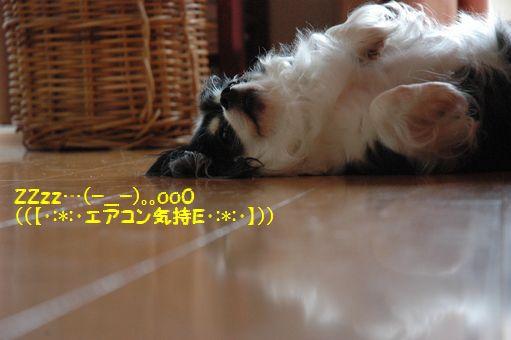 海の日@2012 039.JPG