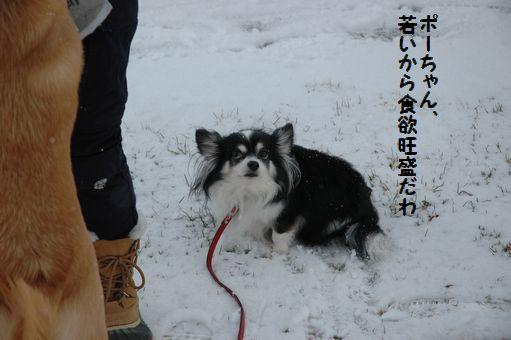 雪やこんこん♪ 030.JPG