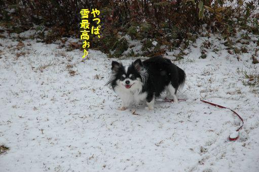 雪やこんこん♪ 056.JPG