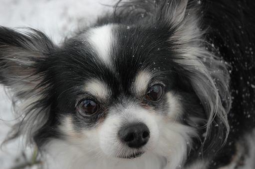 雪やこんこん♪ 086.JPG