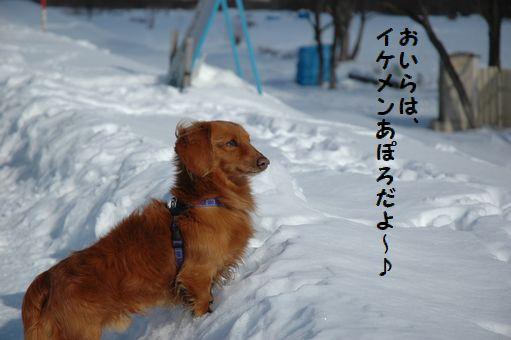 雪ん子たち2011 029.JPG