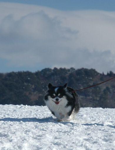雪ん子たち2011 118.JPG