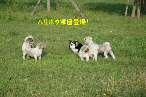 2011暑中お見舞い申し上げます~♪2011 001.JPG
