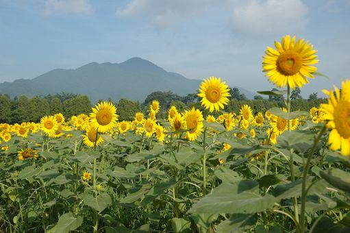 2011暑中お見舞い申し上げます~♪2011 029.JPG