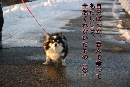 ロンちゃんとポーちゃん 039.JPG