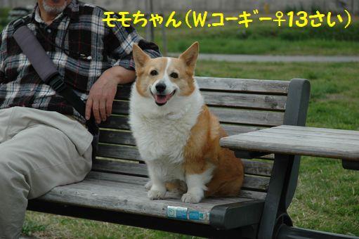G.W&桜@2012 050 - コピー.JPG