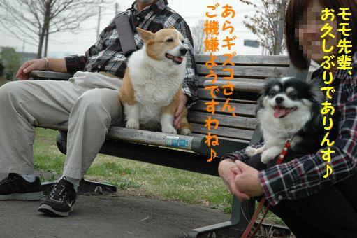 G.W&桜@2012 060.JPG