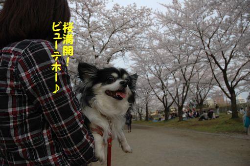 G.W&桜@2012 064.JPG