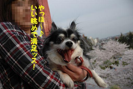 G.W&桜@2012 076.JPG