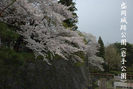 G.W&桜@2012 084.JPG