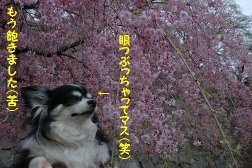 G.W&桜@2012 091.JPG