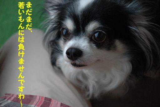 GIZMO HAppy 9th Birthday!!!!!!!!! 011.JPG