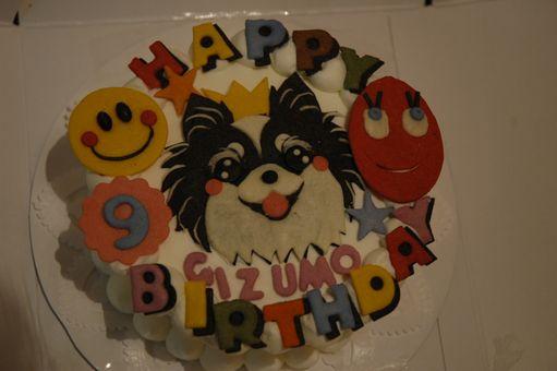 GIZMO HAppy 9th Birthday!!!!!!!!! 016.JPG