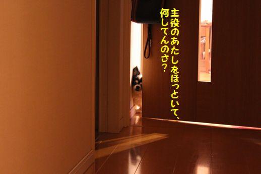 IMG_0047.JPG