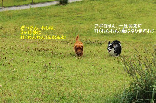 IMG_6249.JPG