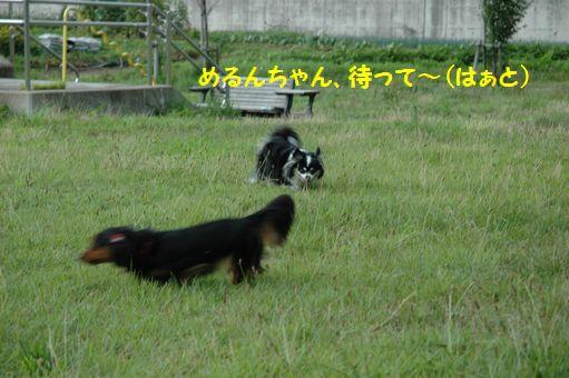 ZOKKON!めろんちゃん!! 006.JPG