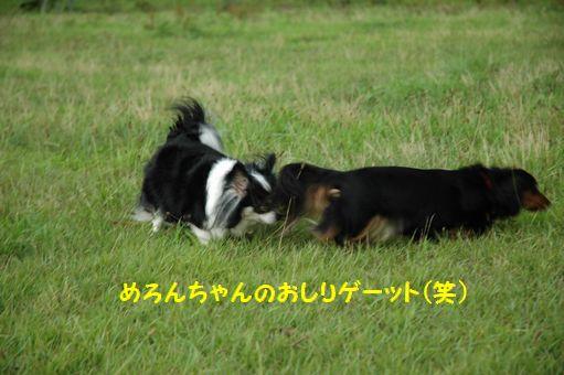 ZOKKON!めろんちゃん!! 009.JPG