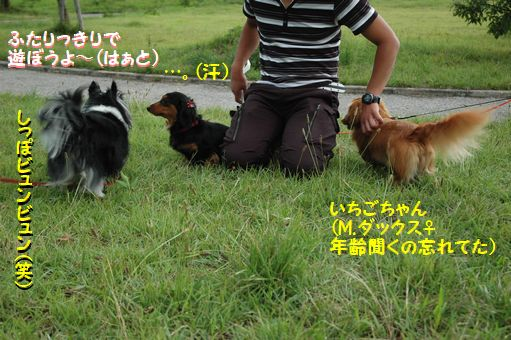 ZOKKON!めろんちゃん!! 025.JPG